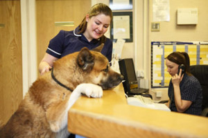 Veterinary Receptionist job description, duties, tasks, and responsibilities