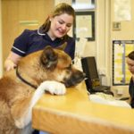 Veterinary Receptionist Job Description Example, Duties, Tasks, and Responsibilities