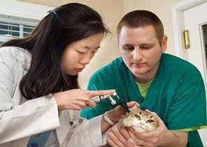 Veterinary Assistant job description, duties, tasks, and responsibilities