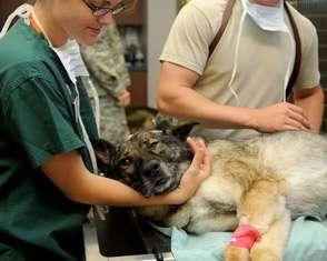 Veterinary Technician job description, duties, tasks, and responsibilities