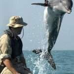 Marine Biologist Job Description Example