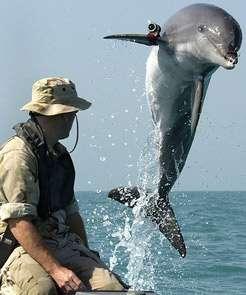 Marine Biologist job description, duties, tasks, and responsibilities