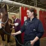 Veterinarian Job Description, Duties, and Responsibilities