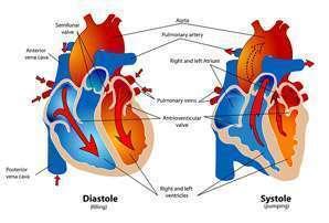 Cardiovascular technologist job description, duties, tasks, and responsibilities