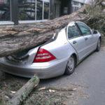 Auto Insurance Agent Job Description, Duties, and Responsibilities